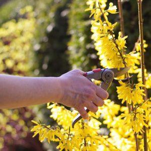springtime flowers moran insurance